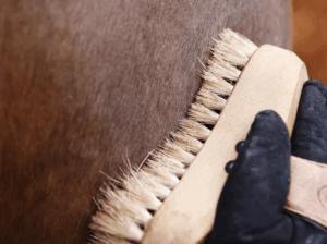 Основные расходные материалы для лошадей