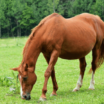 Особенности беременности лошадей