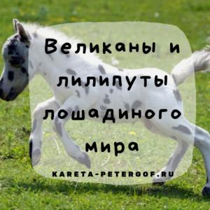 Великаны и лилипуты лошадиного мира