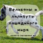 Лошади большие и маленькие